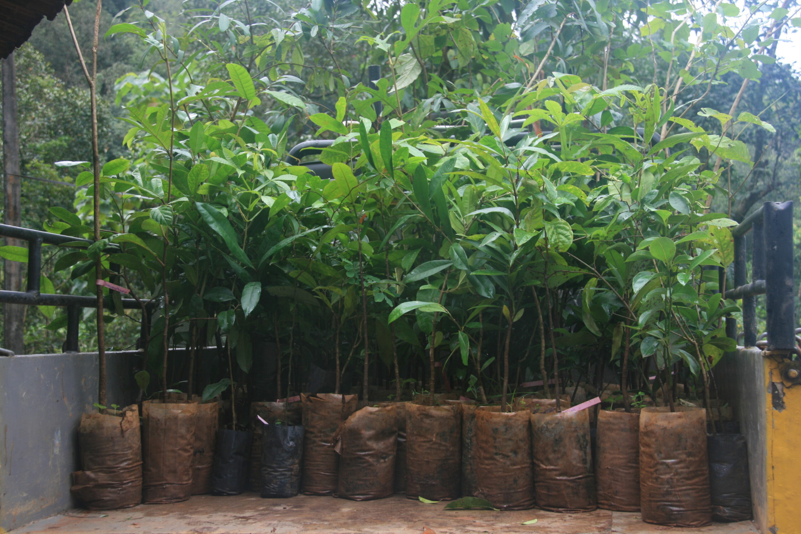 22nd Aug 2015 200 Sapling Planting